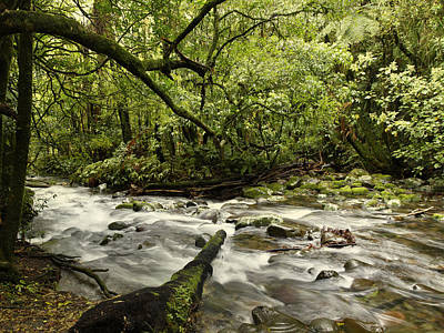 Jungle Stream Art Print by Les Cunliffe