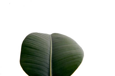 Photograph - Leaf by Scott Sanders