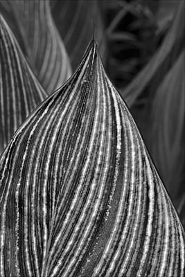 Leaves Art Print by Robert Ullmann