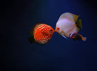 Clown Fish Photograph - Love by Heike Hultsch