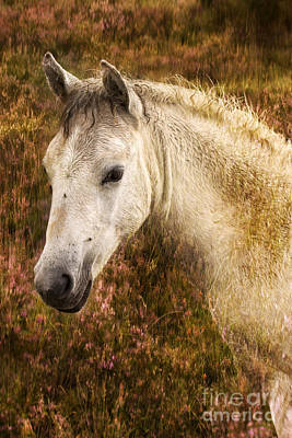 New Forest Pony Art Print by Angel  Tarantella