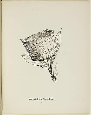 Nonsense Botany By Edward Lear Art Print
