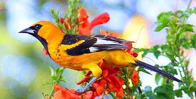 Photograph - Spot-breasted Oriole by Dart and Suze Humeston