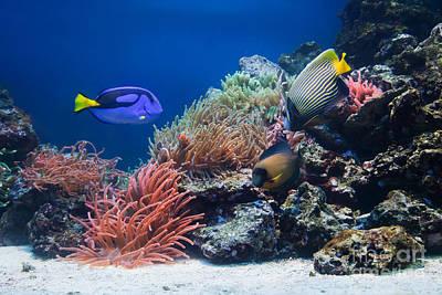 Tropical Photograph - Underwater Life by Michal Bednarek