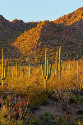 Fred Photograph - Usa, Arizona, Tucson by Jaynes Gallery