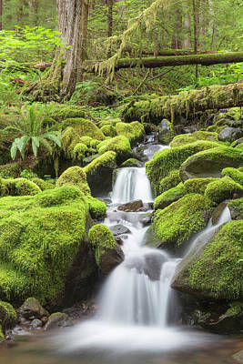 Olympic National Park Photograph - Usa, Washington, Olympic National Park by Jaynes Gallery