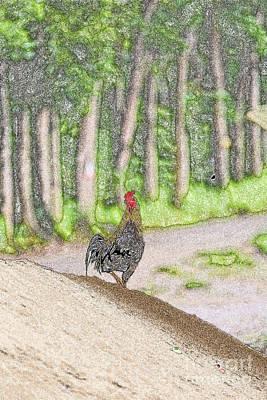 Chickens Original