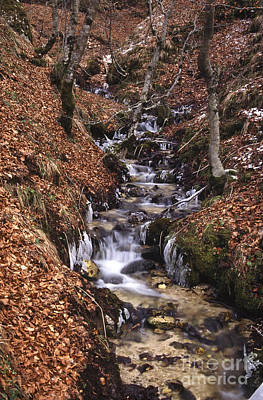 Leaves Photograph - Wintertime In Abruzzo National Park by George Atsametakis