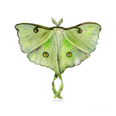 On-white Painting - 100 Luna Moth by Amy Kirkpatrick