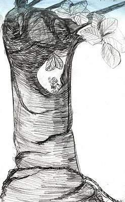 Banian Drawing - 100 Years by Alyona Kuraeva