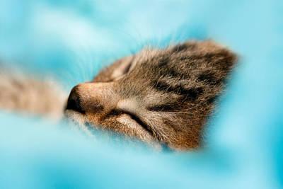 100pct  Innocence  Baby Kitten Art Print by Roeselien Raimond