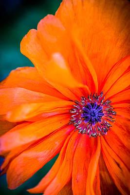 Photograph - 101 Petals by Randy Scherkenbach