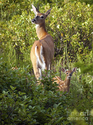 Photograph - 1022p Deer by NightVisions