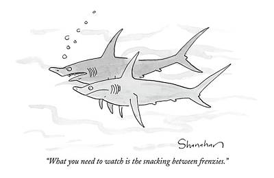 Reef Shark Drawing - What You Need To Watch Is The Snacking by Danny Shanahan