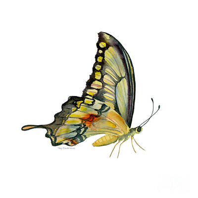 Design Turnpike Vintage Farmouse - 104 Perched Swallowtail Butterfly by Amy Kirkpatrick
