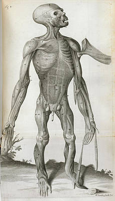 Bennett Photograph - Anatomical Drawing by British Library