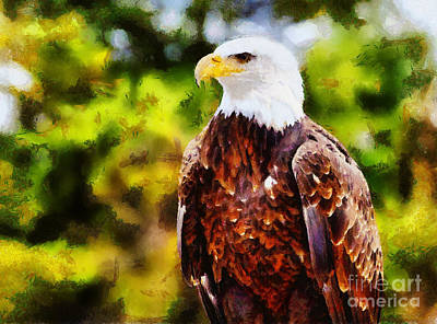 Nirvana - Bald Eagle by Les Palenik