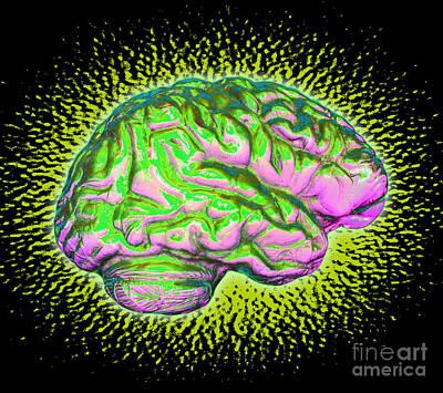 Photograph - Brain by Dennis D Potokar