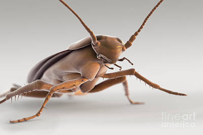 Cockroach Art Print by Science Picture Co