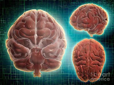 Lobe Digital Art - Conceptual Image Of Human Brain by Stocktrek Images