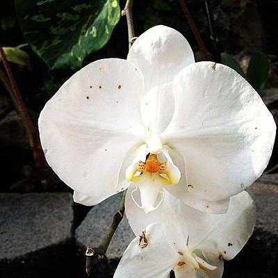 Orchids Photograph - #hawaii #photography #mytravelgram by Katrina Cregger
