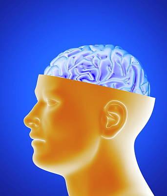 Human Brain Art Print by Alfred Pasieka/science Photo Library
