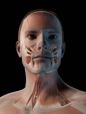 Front View Photograph - Human Facial Muscles by Sebastian Kaulitzki