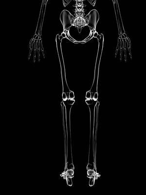 Human Leg Bones Art Print by Sebastian Kaulitzki