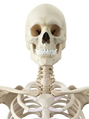 Human Skull Art Print by Sciepro