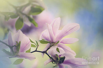 Royalty-Free and Rights-Managed Images - Magnolia Flowers by Nailia Schwarz