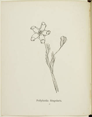 Edition Photograph - Nonsense Botany Collection By Edward Lear by British Library