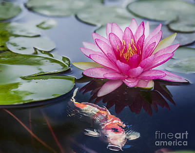 Pink Lotus  Print by Anek Suwannaphoom