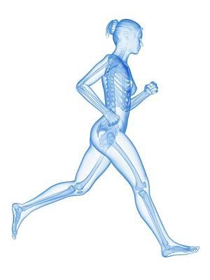 Skeletal System Of A Runner Art Print by Sebastian Kaulitzki
