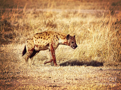 Photograph - Spotted Hyena by Gualtiero Boffi