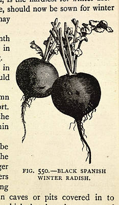 The Economy Photograph - The Book Of Garden Management And Rural E by British Library