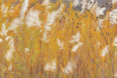 Usa, New Mexico, Bosque Del Apache Print by Jaynes Gallery