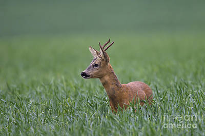 Photograph - 110714p320 by Arterra Picture Library