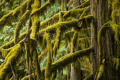 Photograph - 110914-137  North Cascade Rain Forest by Albert Seger