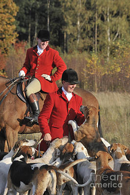 Foxhound Photograph - 111025p103 by Arterra Picture Library