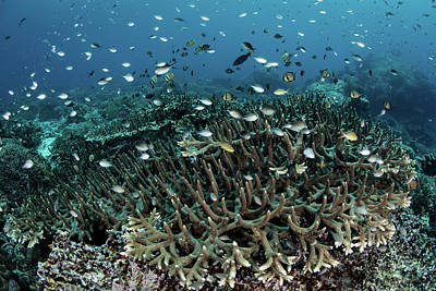 Photograph - A Beautiful Coral Reef Grows Near An by Ethan Daniels