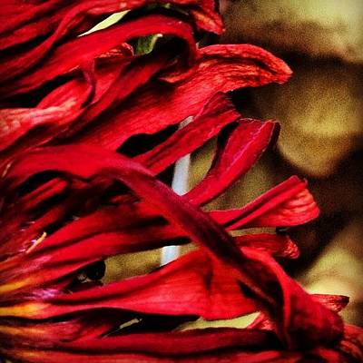 Abstract Flowers Photograph - 12. #abstract #takentodaymarch #flower by Dayna Johnson
