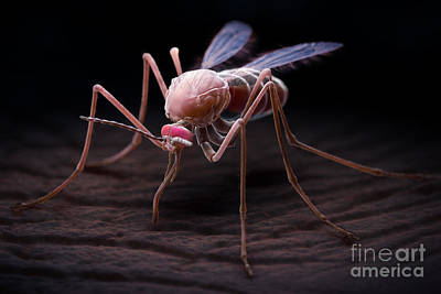 Anopheles Mosquito Art Print by Science Picture Co