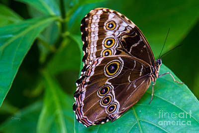 Photograph - The Eyes On The Butterfly Wings by Rene Triay Photography