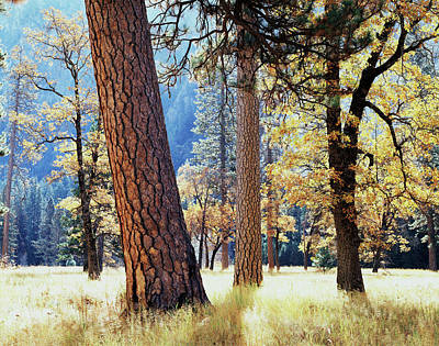 Quercus Photograph - California, Sierra Nevada Mountains by Christopher Talbot Frank