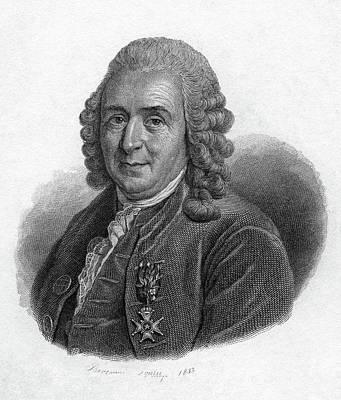 Painting - Carolus Linnaeus (1707-1778) by Granger