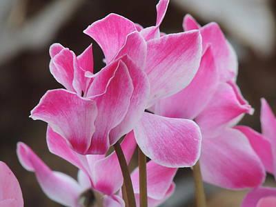 Photograph - Flower Series by Keith Rautio