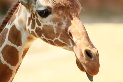 Giraff Art Print by Tinjoe Mbugus