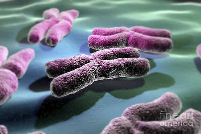 Heredity Photograph - Human Chromosomes by Science Picture Co