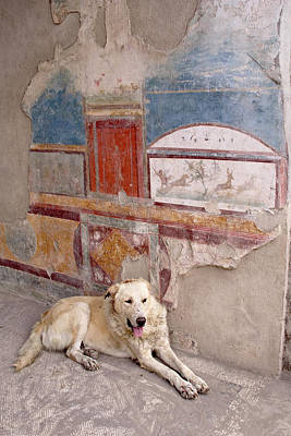 Pompeii Photograph - Italy, Campania, Pompeii by Jaynes Gallery