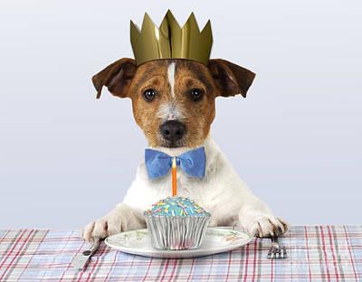 Photograph - Jack Russell Terrier by John Daniels
